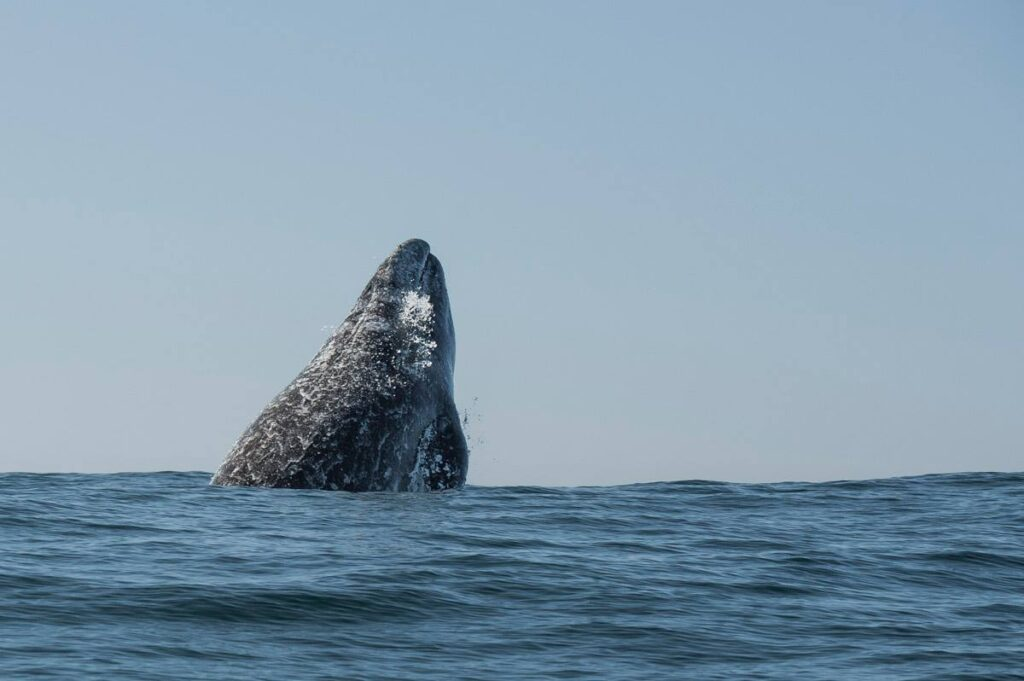 whale watching tours in Depoe Bay